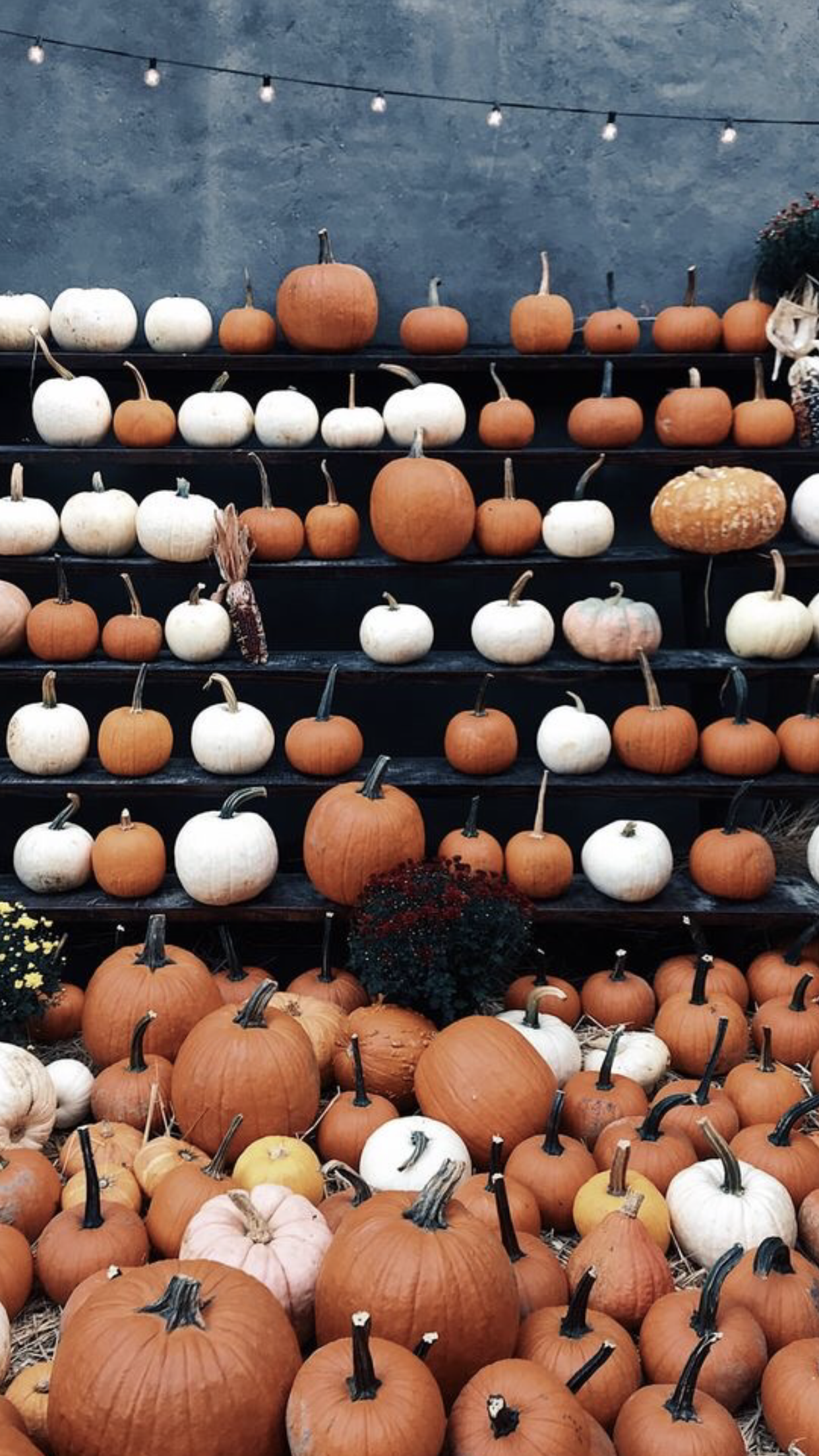 21 Aesthetic Fall Iphone Wallpapers You Need for Spooky Season ...